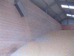 getrockneter Körnermais mit 15% Feuchtigkeit zur Herstellung von Futtermitteln